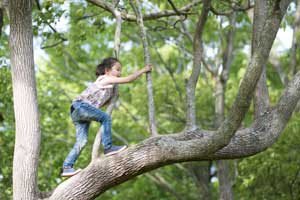 The Parents' Website | Image of a young girl climbing a tree